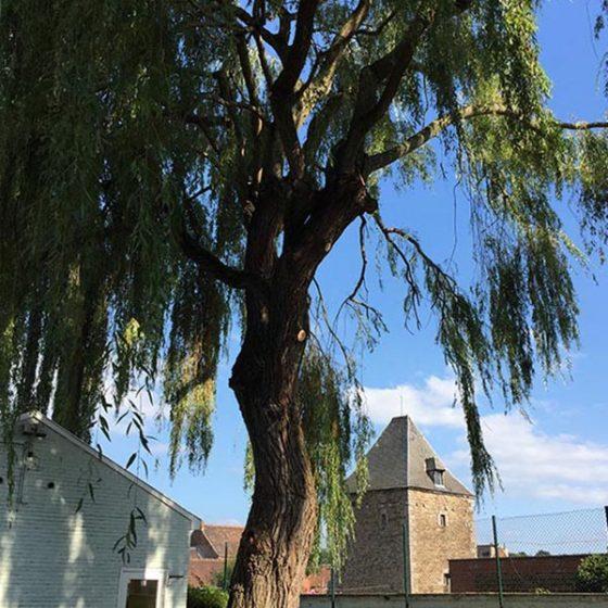 Entretien arbre